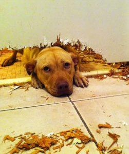 dog seperation anxiety dog behaviour